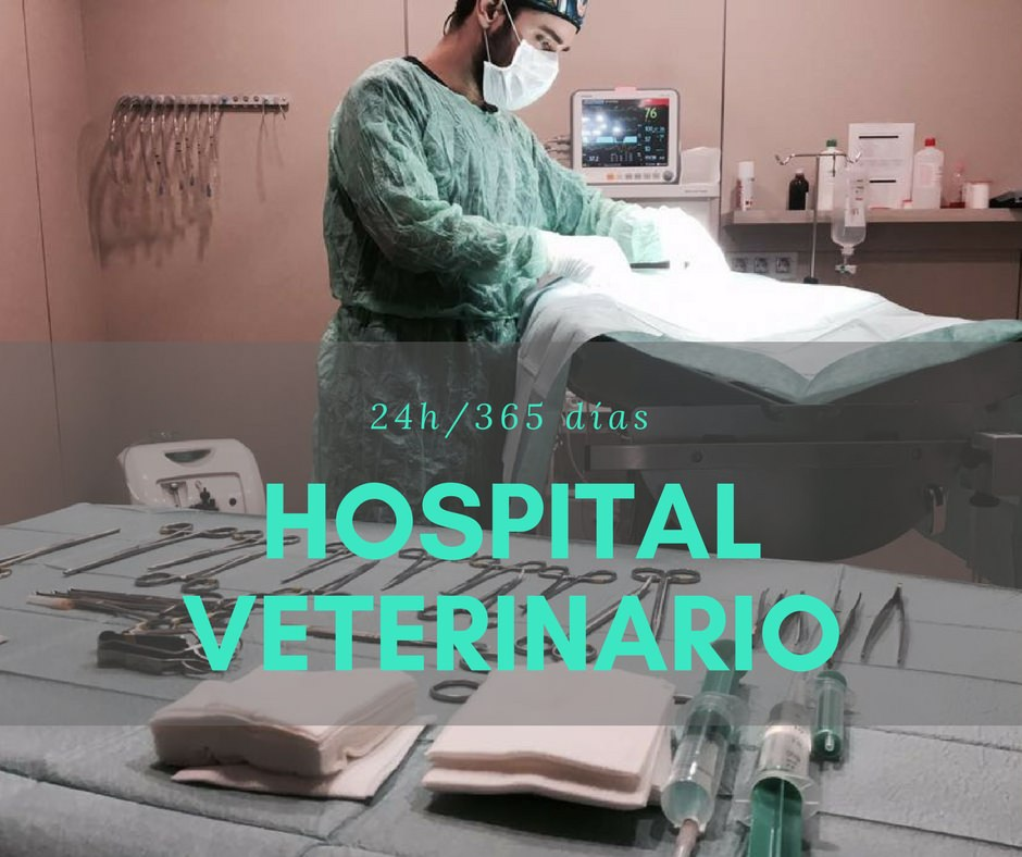hospital-veterinario-barcelona