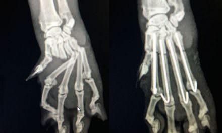 Radiologia veterinària