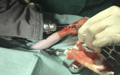 Traumatologia veterinària