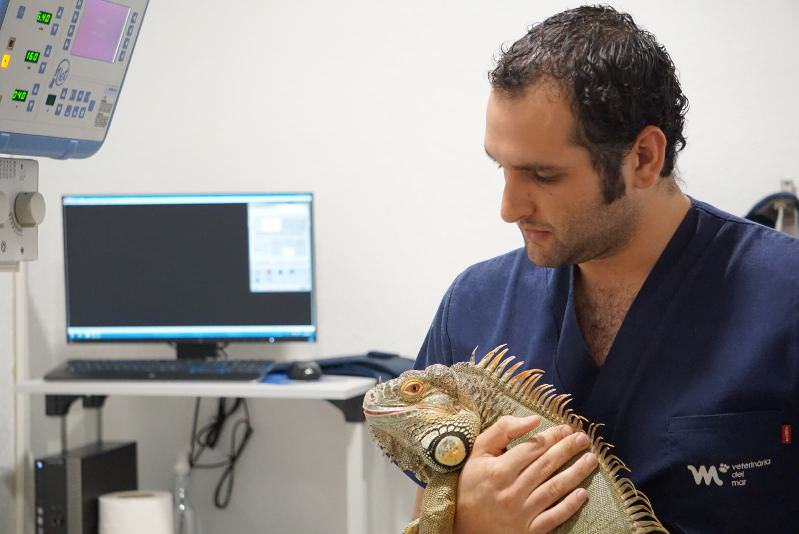 Iguana | Veterinario Exoticos Barcelona