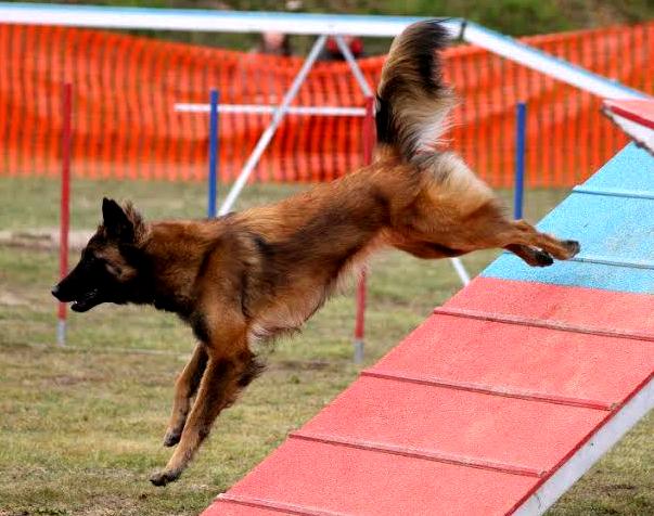 Etologia, la conducta dels gossos