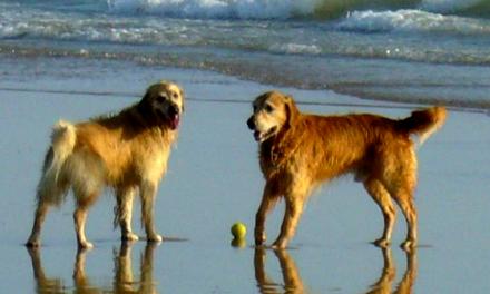 Animals domèstics a les platges de Barcelona.