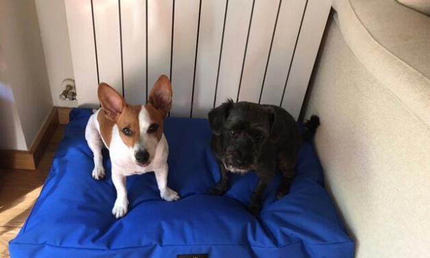 Isis i Tiko estrenen el seu llit viscoelàstic !