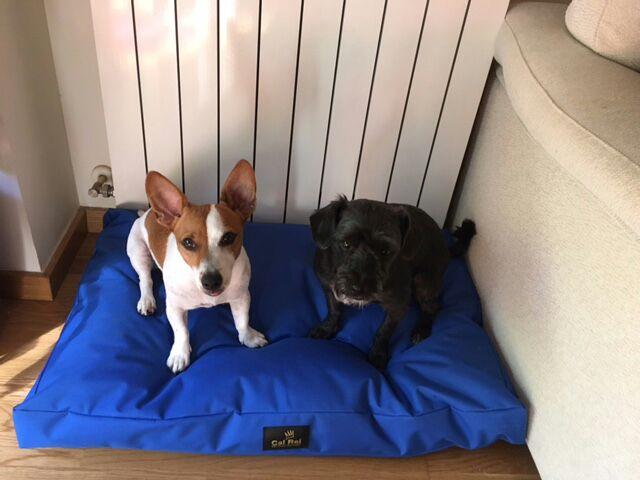 Isis i Tiko amb el seu llit viscoelàstic