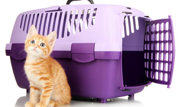 Coses a tenir en compte al viatjar amb la mascota
