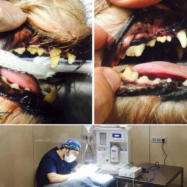 higiene-dental-del-teu-gos-promocio