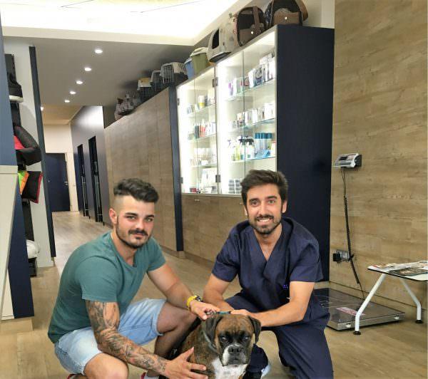 Veterinarios Barcelona Boxer