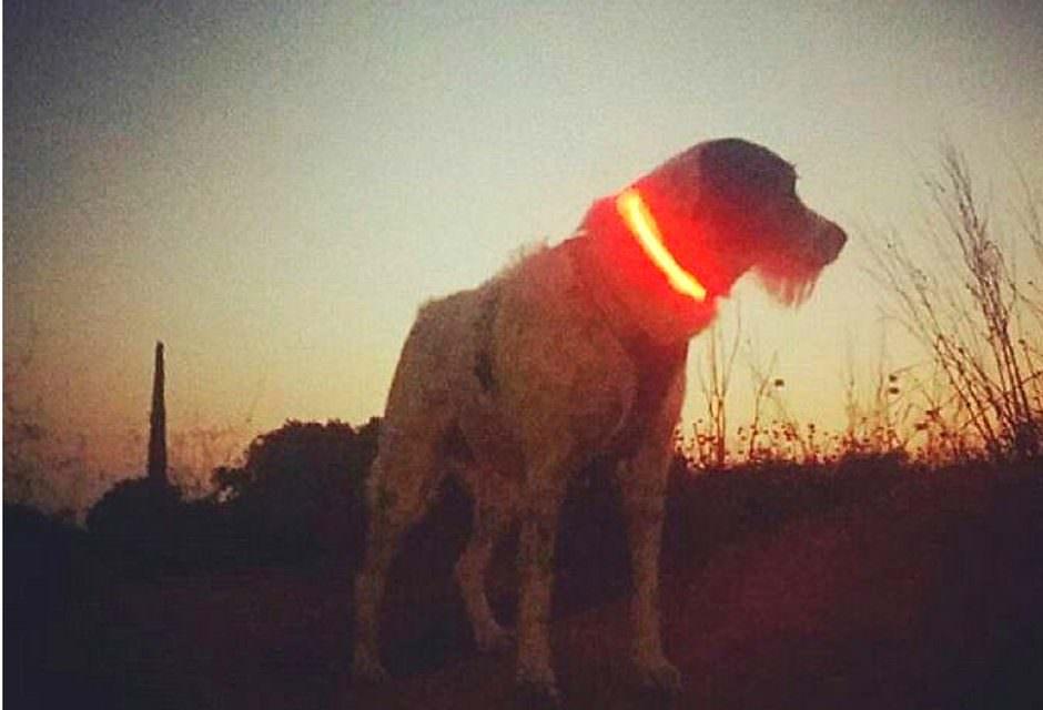 Collars de gos lluminosos amb led i no el perdis de vista