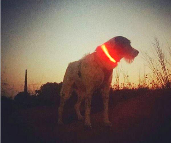 collars-de-gos-lluminosos-amb-led