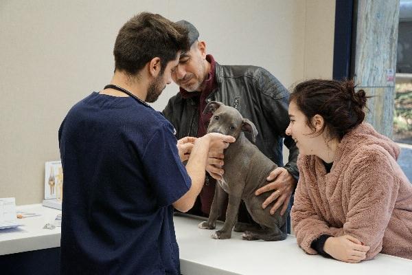 esternuts-tos-gossos-american-staffordshire-veterinaris-barcelona-558