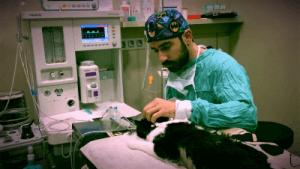 Cirurgia veterinària gat Puma a Hospital Veterinari del Mar