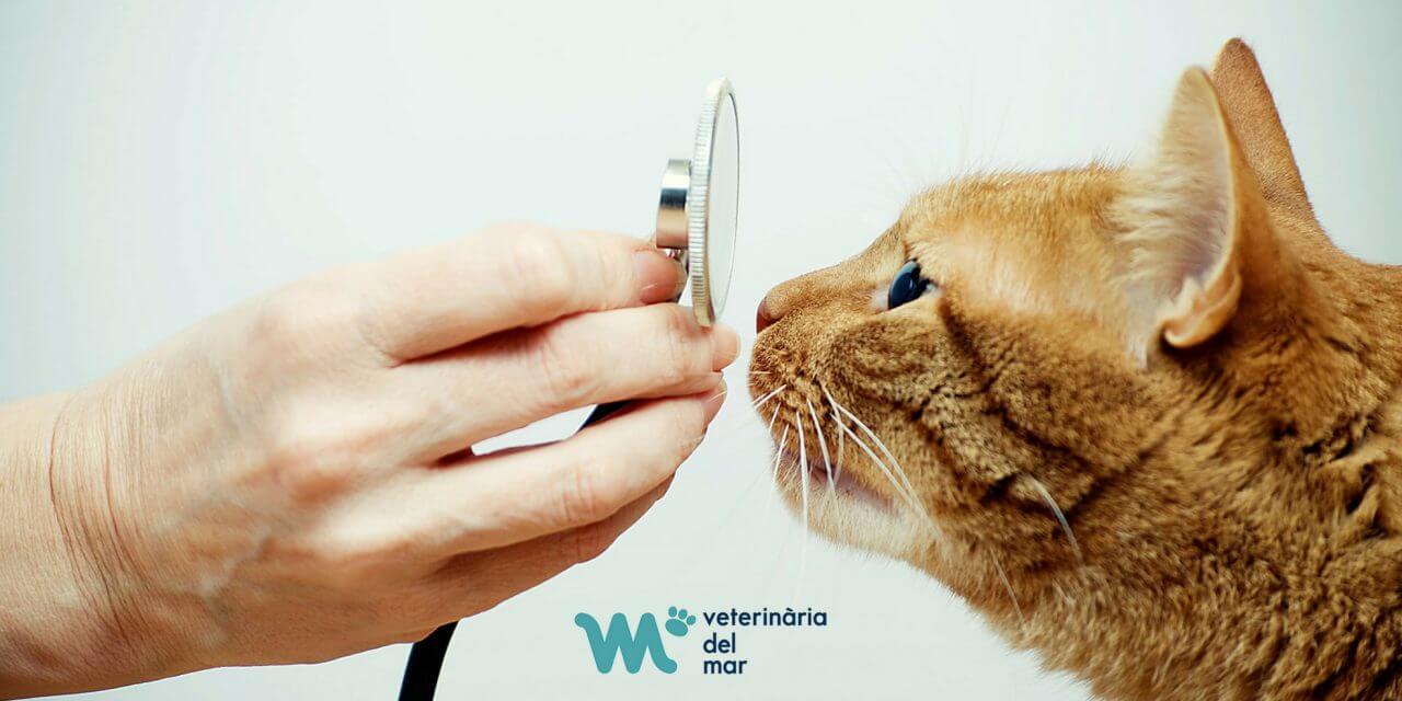 Hospital Veterinari del Mar certificat especialista en medicina felina per la ISFM