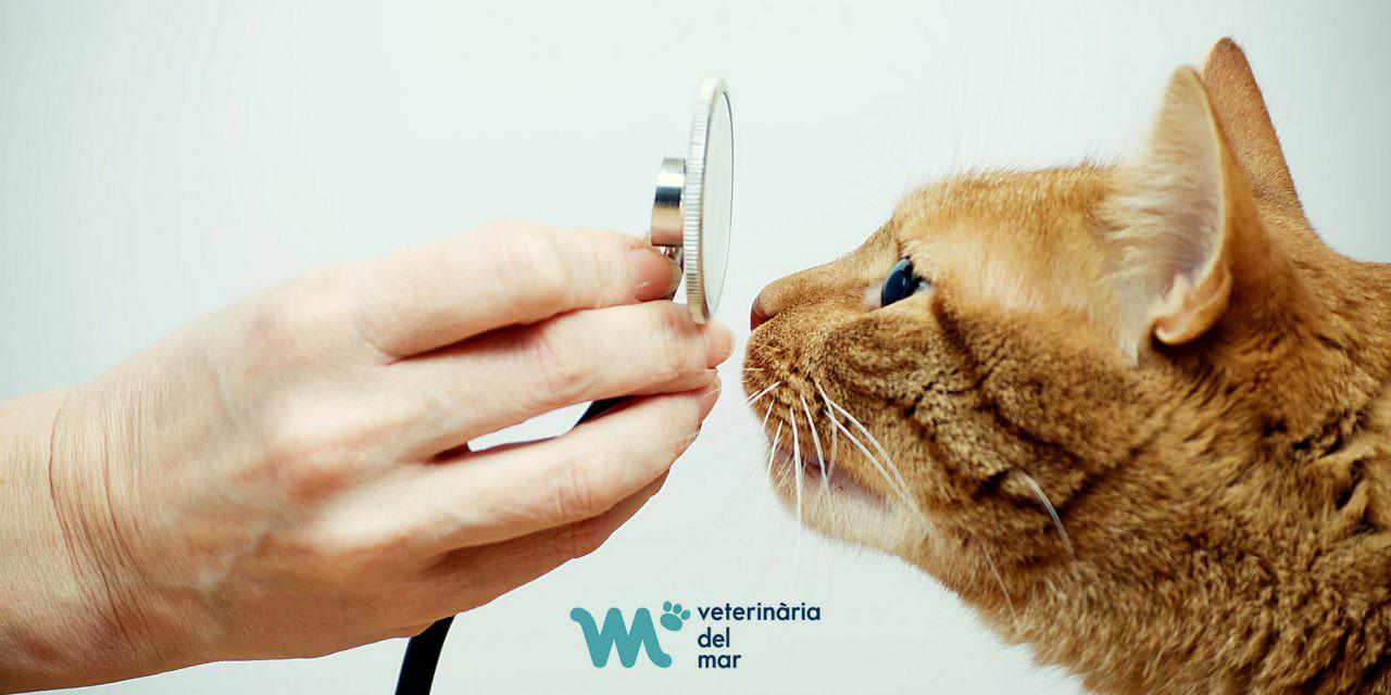 Clínica Veterinaria del Mar certificada especialista en medicina felina por la ISFM