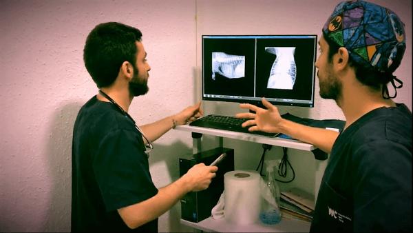cardiologo-veterinario-barcelona