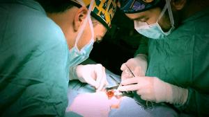 veterinario-cardiologo-barcelona