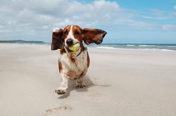 Mapa de playas para perros 2017
