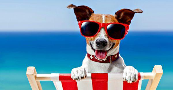 Gos amb ulleres de sol platja