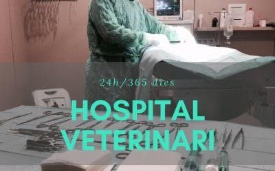 Hospital veterinari