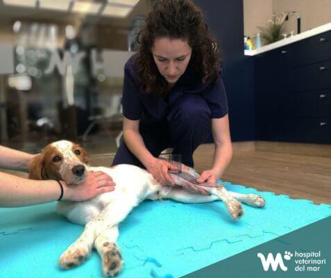 fisioterapia rehabilitación veterinaria