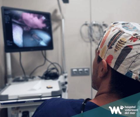 Mejoramos la área de endoscopia del Hospital Veterinari del Mar