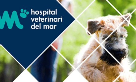 MEJORAMOS LA ÁREA DE ENDOSCOPIA DEL HOSPITAL VETERINARI DEL MAR