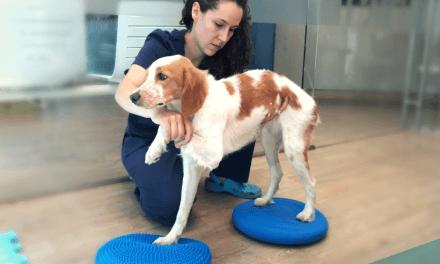 Fisioteràpia i rehabilitació