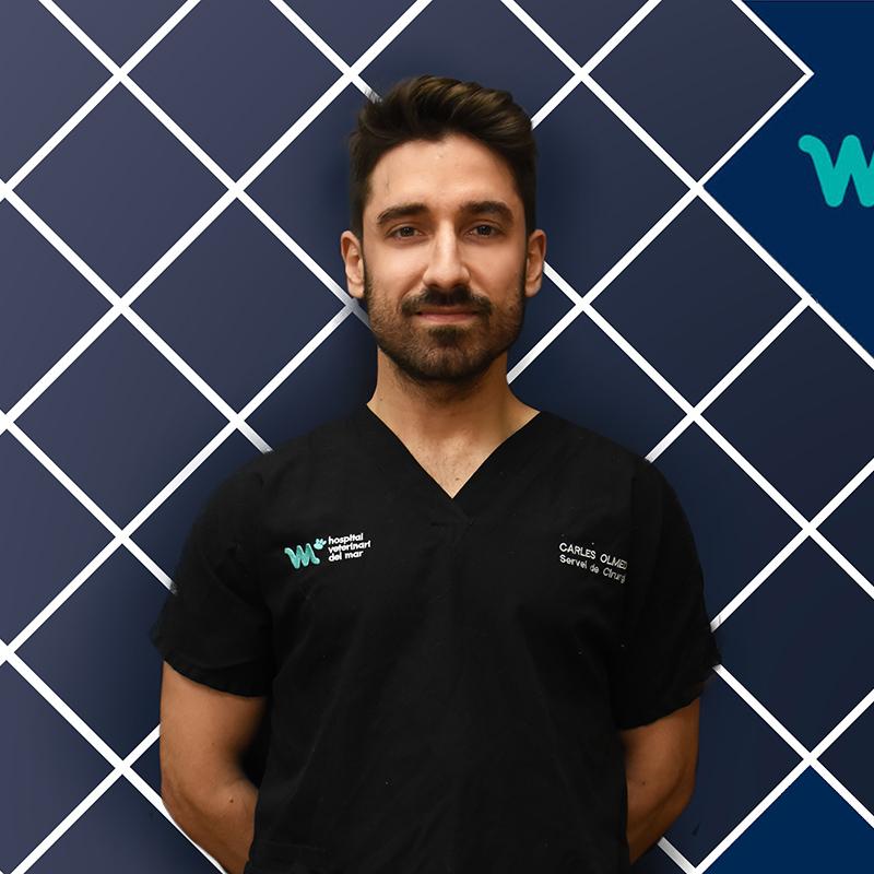 Cirugía Veterinaria y Mínima Invasión | Carles Olmedo | Hospital Veterinario del Mar