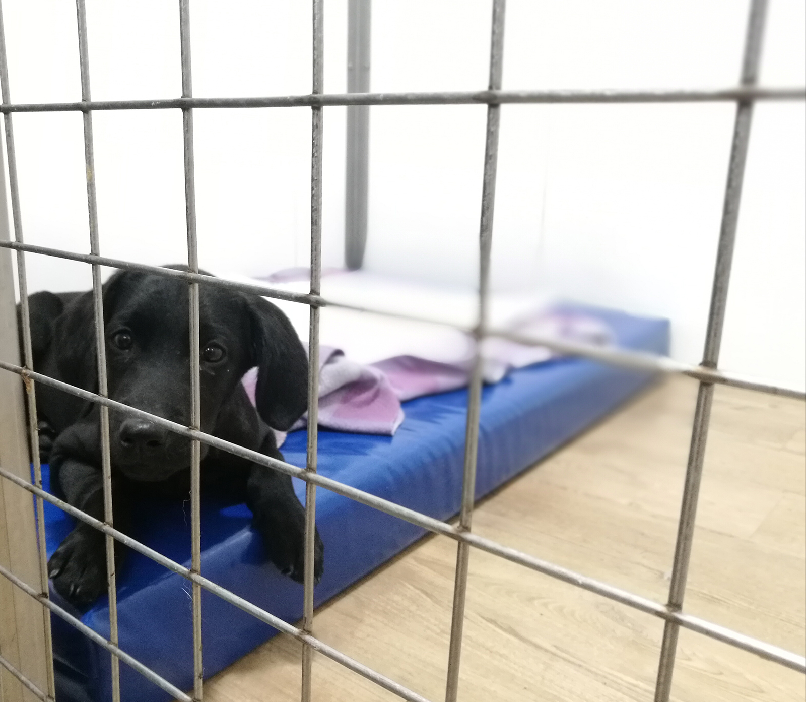 Veterinary Hospital | Dog admitted to HV del Mar