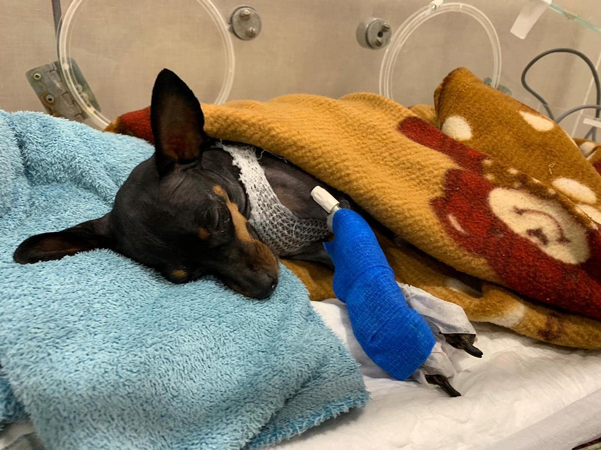 Hospital Veterinario Barcelona | UCI para Perros