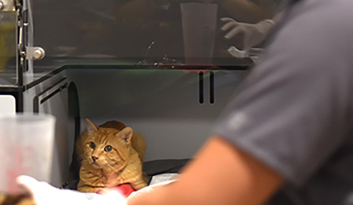 Hospital Veterinario Barcelona | Veterinario Gatos