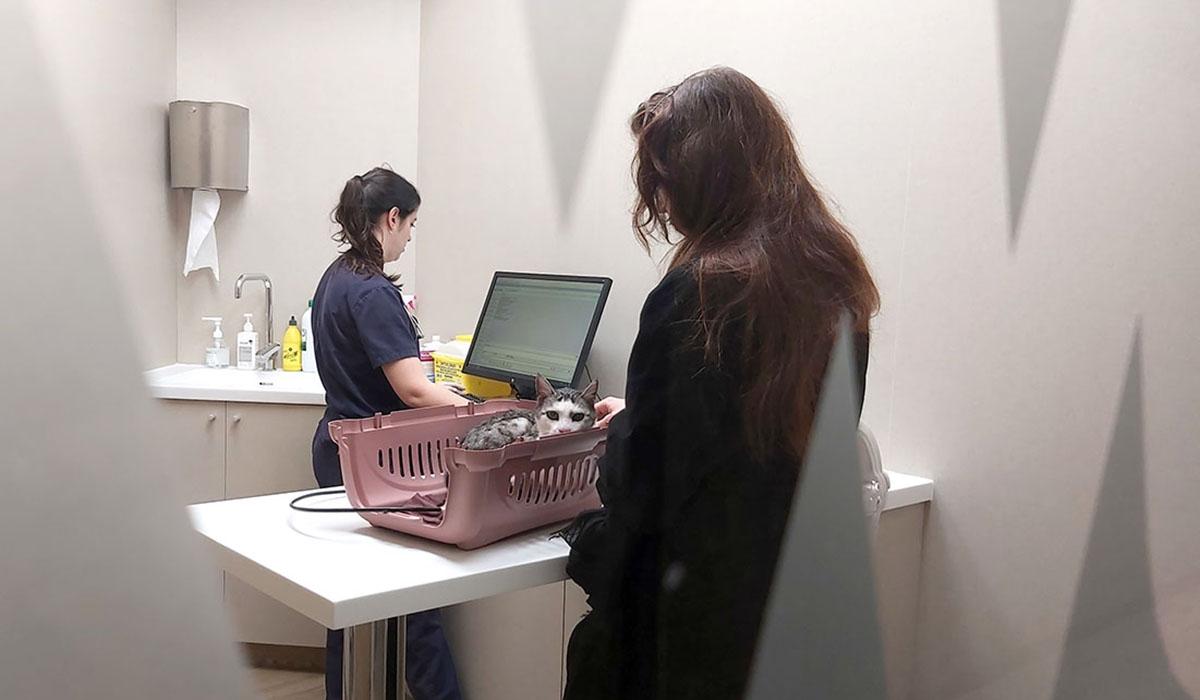 Hospital Veterinario del Mar | Cats Veterinary Office