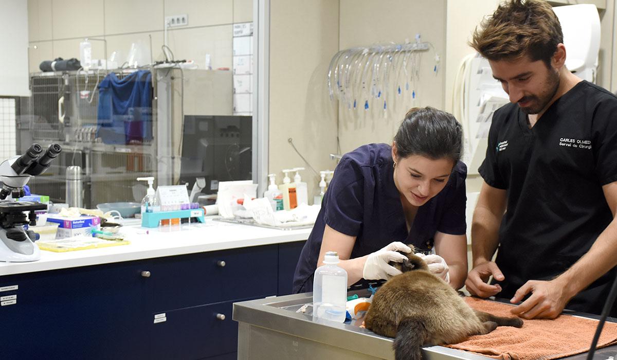 Pre-surgical pet hospitalization | Hospital Veterinario del Mar