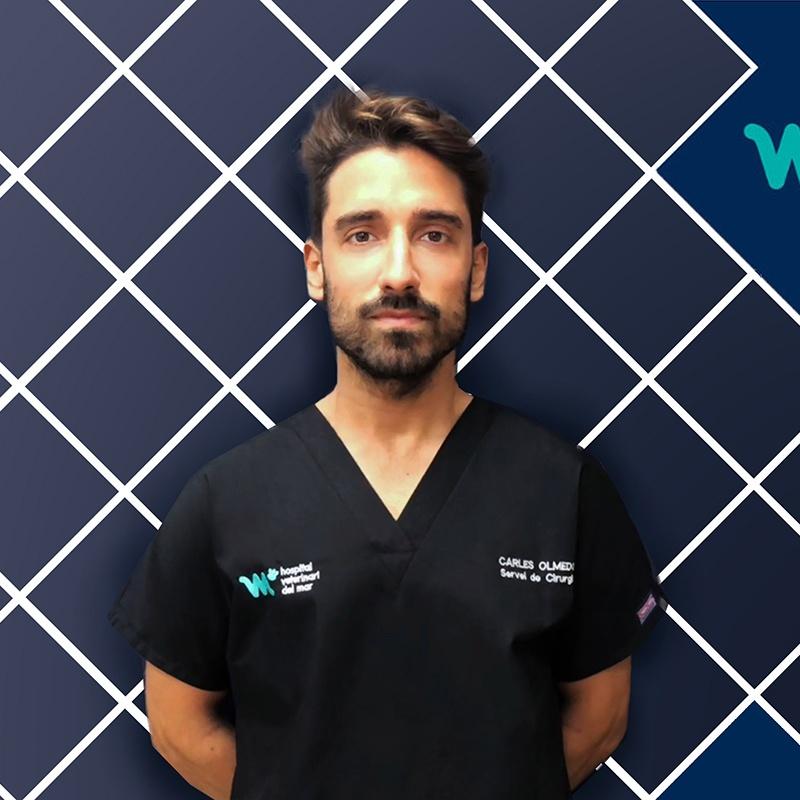 Veterinary and Minimally Invasive Surgery | Carles Olmedo | Hospital Veterinario del Mar